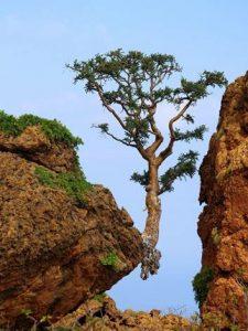 Tree between Rock Cliffs