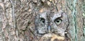owl camouflage hiding