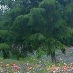 wild garden